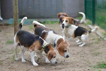 Liebevolles neues Zuhause gesucht - Kreis Coesfeld brachte über 20 Hunde im Tierheim unter