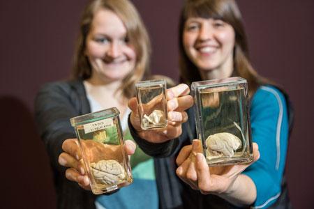Die Vielfalt tierischer Gehirne - LWL-Museum bereitet neue Ausstellung vor