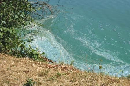 Hunde vor Blaualgen im Aasee schützen