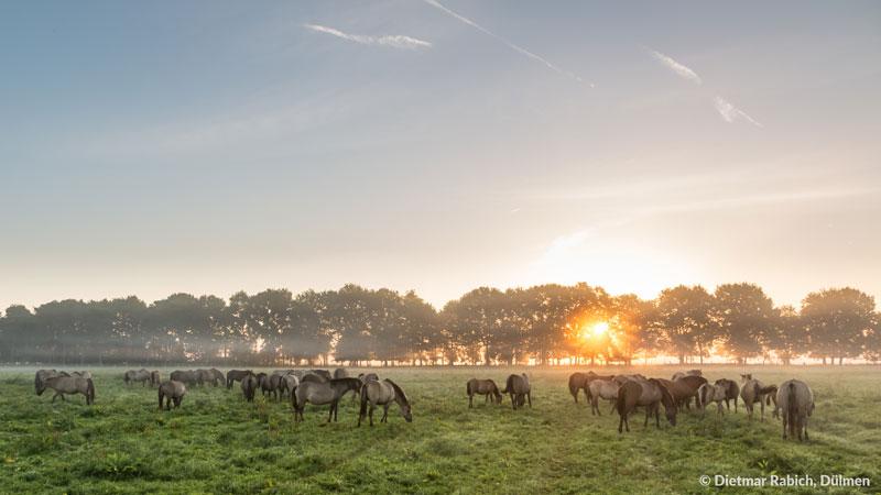 Öffentliche Führungen in der Wildpferdebahn 2019