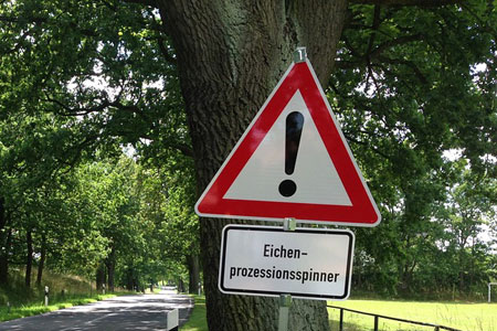 Eichenprozessionsspinner im Stadtgebiet Emsdetten