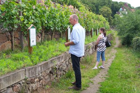 Weinwandern rund um Radebeul