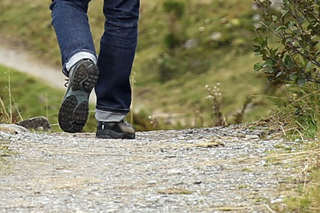 Beckumer NaTouren: Wanderung zu den Wildrindern