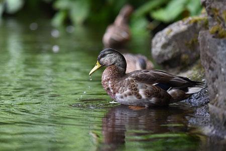 Blaualgen in Bochumer Gewässern – Stadt bittet um Vorsicht