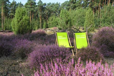 Picknickplätze im Kreis Warendorf / Blühende Heidelandschaft in Telgte erleben