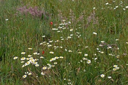 Förderprogramm Blühflächen: Regionales Saatgut kostenlos erhältlich!