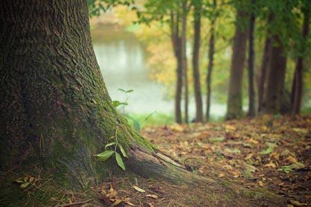 Straßenbauamt des Kreises Steinfurt erinnert: Bäume jetzt kontrollieren!