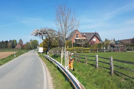 Arbeiten an Schulen und Kreisstraßen: Kreis Coesfeld pflanzt neue Bäume