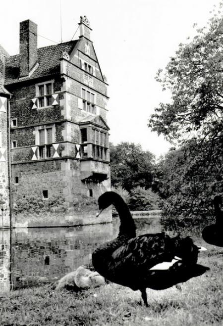 Fundstücke aus dem Kreisarchiv: Schwarzer Schwan auf Burg Vischering gerettet