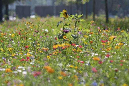 Langer Tag der StadtNatur 2021 in Bochum: Mitmacher gesucht