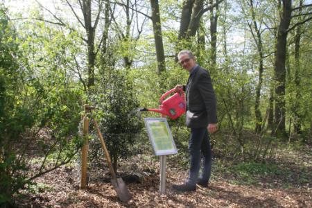 """""""Weg der Jahresbäume"""": Stechpalme gepflanzt"""